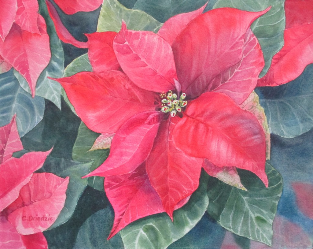 B&B Poinsettia