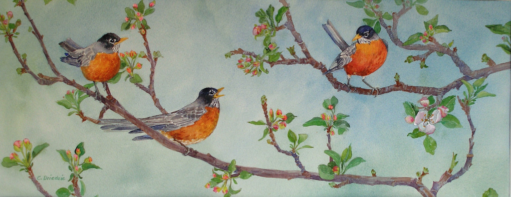 Creatures Robins in Apple Tree